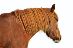 Horse head profile Stock Photo
