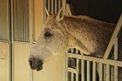 Horse head profile Royalty Free Stock Images