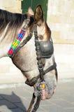 Horse head Stock Photos