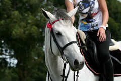 Horse head and rider. A close up of a white horse head and rider Stock Photo