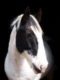 Horse Head Shot Royalty Free Stock Image