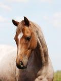 Horse Head Shot Stock Image
