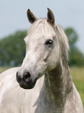 Horse Head Shot Royalty Free Stock Images