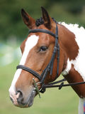 Horse Head Shot In Snaffle Bridle Stock Image