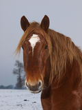 Horse Head Shot In The Snow Royalty Free Stock Images