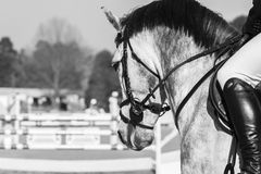 Horse Head Show Jumping Vintage royalty free stock image