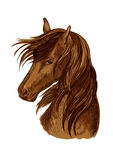 Horse head sketch of brown racehorse Stock Image