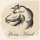 Horse Head Sketch Stock Photo