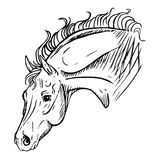 Horse head. Sketch drawing of horse.  vector illustration Royalty Free Stock Photography