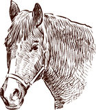 Horse head sketch Stock Photography