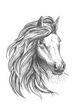 Horse head sketch with wavy mane. Sketch of horse head with glorious wavy mane and calm look, playful glance and elegant neck. Isolated on white. For equestrian Stock Photography