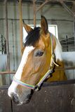 Horse head in stall Stock Photo