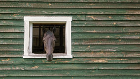 Horse Head Sticking Out Of Barn Stock Images