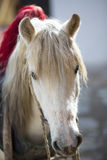 Horse head in Tibet Royalty Free Stock Photography