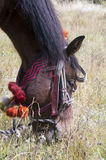 Horse head and traditional finery. Kham horse grazing, pompons and traditional decorations. Vertical Stock Images