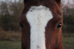 Horse head. Wild stallion photographed from very close. royalty free stock photos