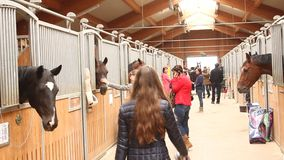 Horse heads at stalls and visitors stock footage