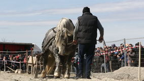 Horse heavy pull tournament stock footage