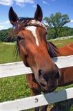 Horse Hello. Closeup of horse face at a farm stock photos