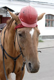 Horse in a helmet. Horse portrait, horse in a helmet royalty free stock image
