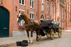 Horse on her break. Horse and carriage in a street in Bruges, Belgium Royalty Free Stock Photography
