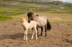 Horse and her little foal.  stock photos