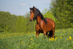 The horse in the herd Stock Photography