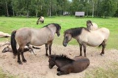 Horse herd Royalty Free Stock Photo
