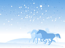 Horse Herd In Winter Stock Images