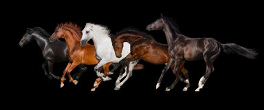 Horse herd isolated. On black, banner for website Royalty Free Stock Photo