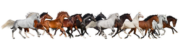 Horse herd isolated. On white, banner for website Royalty Free Stock Photos