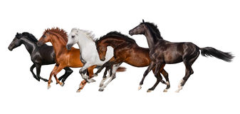 Horse herd isolated. On white, banner for website Stock Photos
