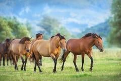 Horse herd in mountain. Horse herd run on summer pasture stock photos