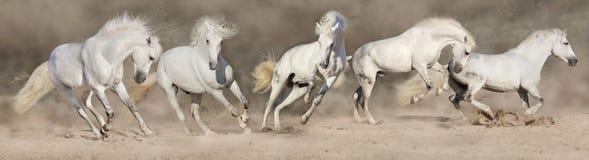 Horse herd panorama Royalty Free Stock Photo