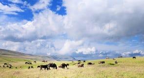 Horse herd and sky stock photo