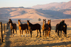 Horse herd. On the pasture Royalty Free Stock Photos