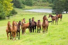 Horse herd. On the pasture Stock Photo