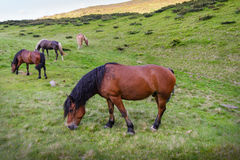 Horse herd on pasture Royalty Free Stock Image