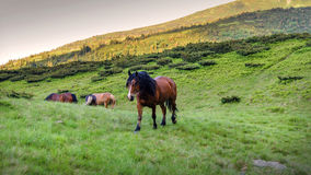 Horse herd on pasture Stock Images