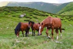 Horse herd on pasture Stock Image