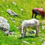 Horse herd Stock Photography