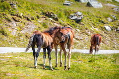 Horse herd on the pasture Royalty Free Stock Photo