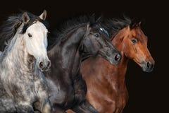 Horse herd portrait Stock Image
