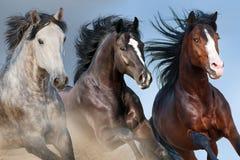 Horse herd portrait Stock Photography