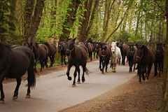 Horse herd on road in alley Royalty Free Stock Photos