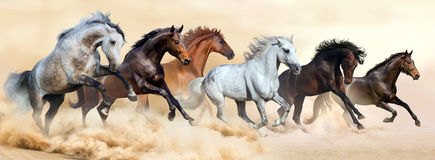 Horse herd run. In clouds of dust stock photo