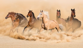 Horse herd. Run in desert sand storm Stock Image