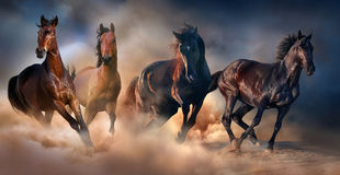 Horse herd run. In desert sand storm against dramatic sky royalty free stock photos