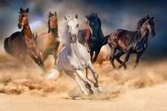 Horse herd run. In desert sand storm against dramatic sky