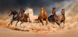 Horse herd. Run in desert sand storm against sky Stock Image